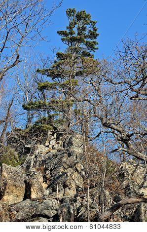 Landscape On Mountain Taiga