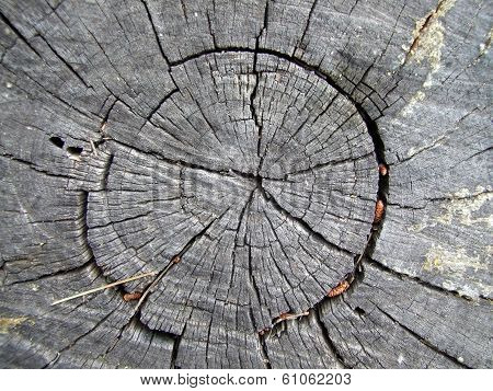 dry old stump - view from above