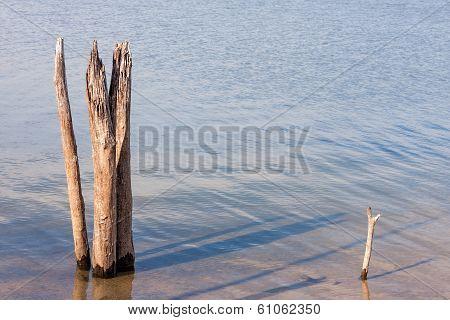 Dead Tree Stumps In Lake
