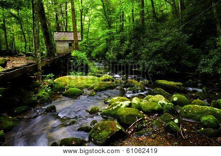Creek In Great Smoky Mountains National Park