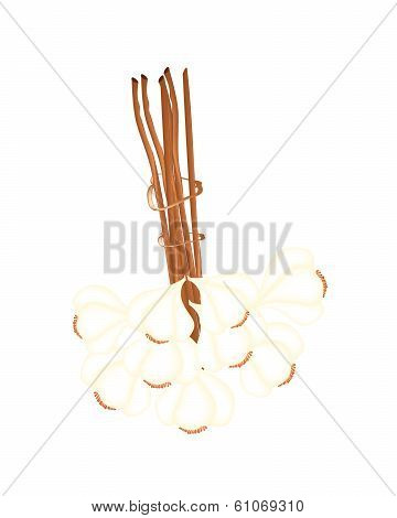A Bunch Of Garlic On White Background