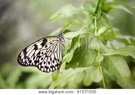 Butterfly - Spring is here!