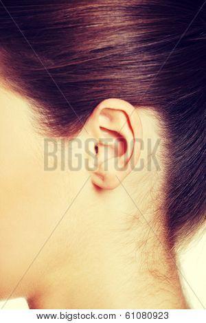 An ear closeup.