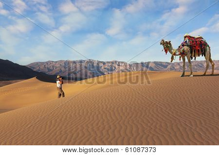 The woman - tourist photographing the beautiful camel in the desert. Dromedary decorated with picturesque harness and bright red blanket