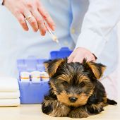 stock photo of veterinary  - Veterinary treatment  - JPG