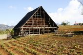 picture of tobacco barn  - A barn used to store and dry harvested tobacco in Cuban countryside - JPG