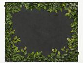 stock photo of elm  - Chalkboard framed in slate with elm branches - JPG
