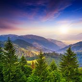 stock photo of cloud forest  - mountain landscape pine trees near valley and colorful forest on hillside under blue sky with clouds and fog at sunset - JPG