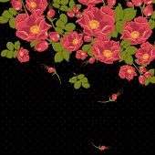 picture of wild-brier  - Floral ornament with wild rose on a polka dot background - JPG