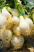 stock photo of scallion  - Full frame take of scallions on display at a street market stall - JPG