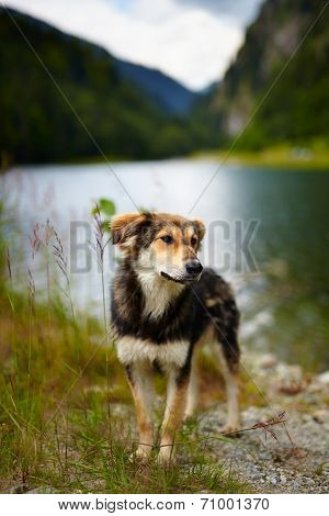 Stray Dog Near A Lake