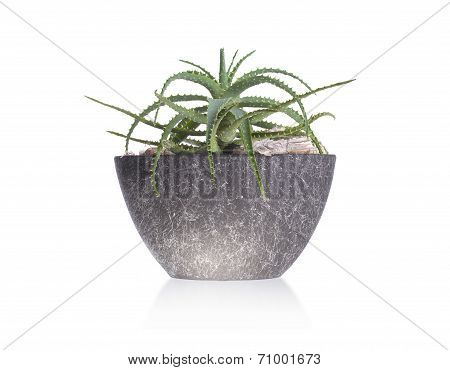Green Cactus In A Grey Pot