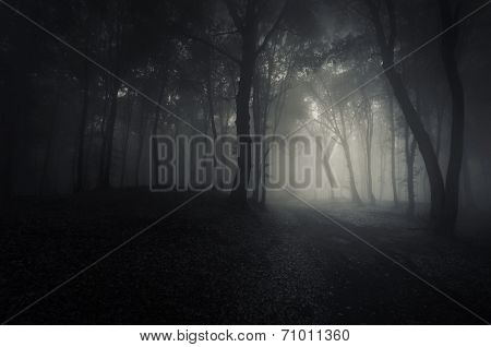 Path trough a dark mysterious forest with fog