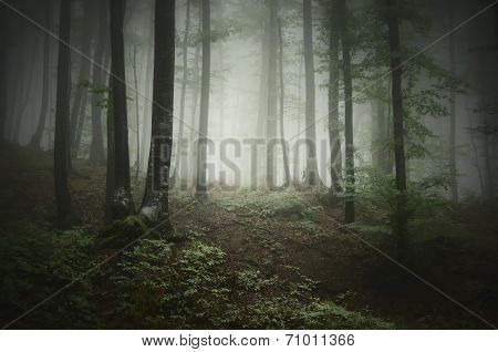 Enchanted fairytale forest with fog