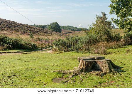 Tree Stump Between Hills In Heathland