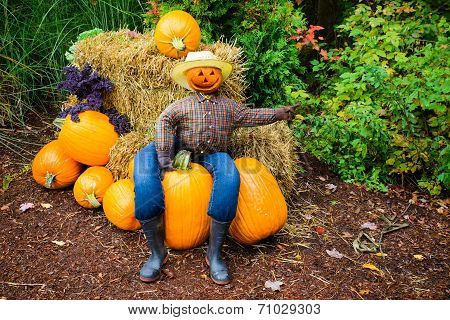 Pointing Scarecrow Sitting On A Pumpkin