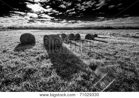 Bales Of Hay In A Field - Black And White