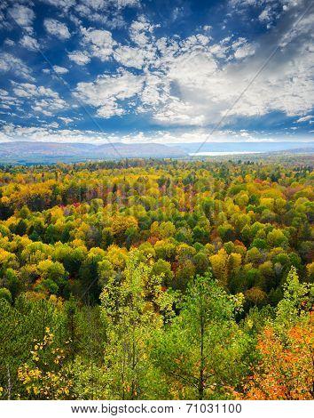 Fall Tree Tops