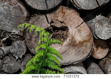 stacked fire-wood with fresh fern