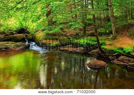 Peaceful Pond In A Forest
