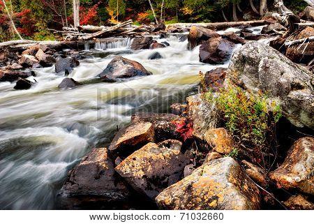 Rushing Stream In The Autumn