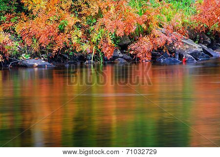 Colorful Autumn Ferns Water Reflection