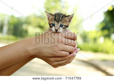 Cute little kitten in hands outdoors