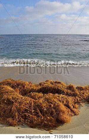 Mounds of Kelp