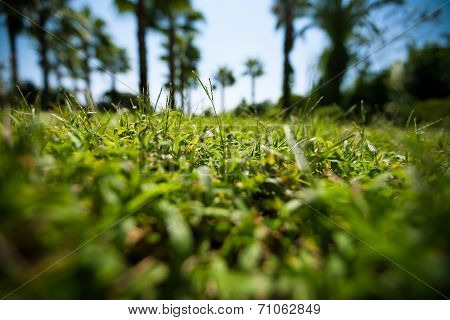 Green Grass On Blured Palm Trees Background