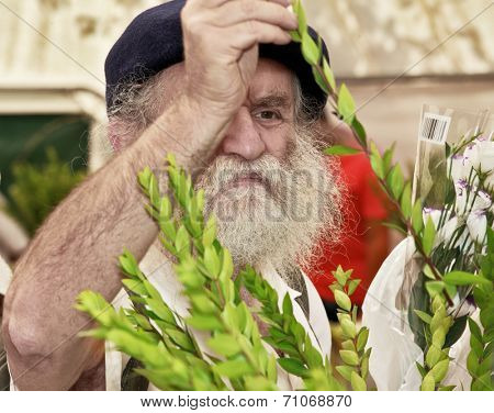 JERUSALEM, ISRAEL - SEPTEMBER 18, 2013: The gray-bearded religious Jew in a black beret carefully chooses ritual plant - myrtle for Sukkot.