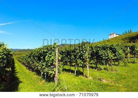 Italian Vineyards - Valpolicella Wine