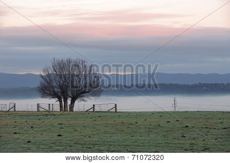Foggy Winter Morning Countryside And Tree Silhouette