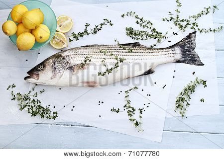 Striped Bass Dinner