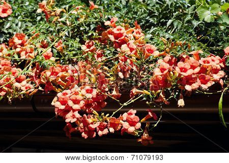 red flowers on the roof