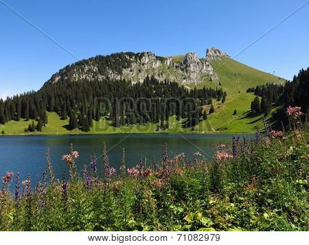 Wildflowers, Lake Oberstockensee And Stockhorn
