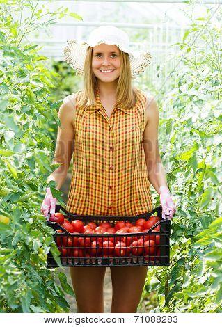 Rich Tomato Harvest