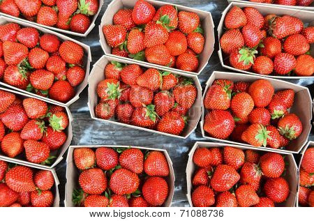 Strawberry  in the boxes