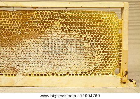 Waxed Honeycomb With Honey