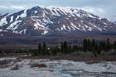 picture of caribou  - A lone caribou stands by a river in Denali National Park - JPG