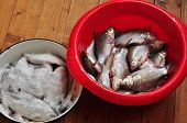 picture of homogeneous  - Two bowls of fresh and salted fish around on a homogeneous background - JPG