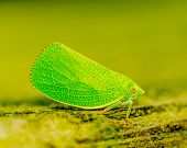 foto of hoppers  - A macro closeup of a Green Leaf - JPG