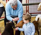 pic of grandmother  - A grandmother helps her grandson feed farm animals at a fall fair - JPG