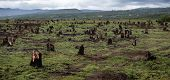 stock photo of slash  - Stumps on the valley caused by deforestation and slash and burn type of agriculture of Madagascar - JPG