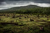 foto of slash  - Stumps on the valley caused by deforestation and slash and burn type of agriculture of Madagascar - JPG