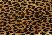 foto of leopard  - Close up black leopard spots texture design - JPG
