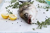 stock photo of striper  - Freshly caught striped bass being prepared for dinner with extreme shallow depth of field - JPG