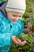 foto of aronia  - A boy with a sprig of Aronia - JPG