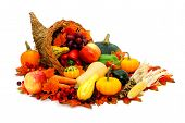picture of gourds  - Thanksgiving cornucopia filled with fresh harvest vegetables - JPG