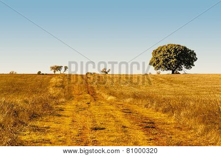 Rural Road In The Fields