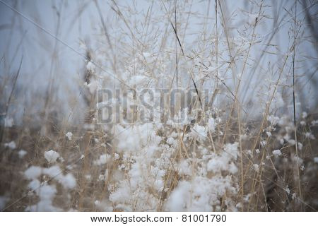 grass under the snow
